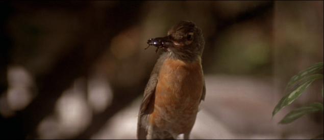 blue-velvet-robin